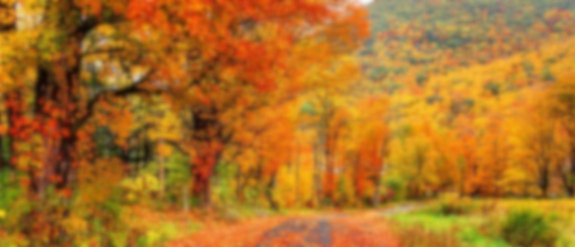 automne-flou
